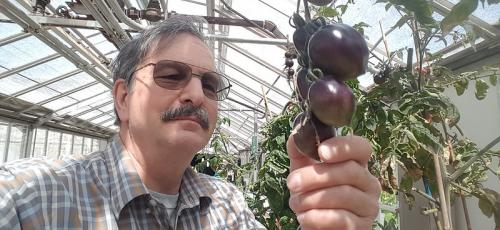 researcher holding tomato